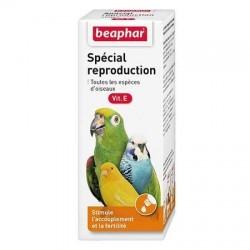 Complément alimentaire spécial reproduction pour oiseau